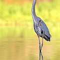 Gbh At First Light by Bryan Keil