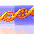 Gene Therapy, Conceptual Image by Science Photo Library