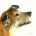 German Shepherd Dog by Nan Wright