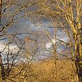 God Made Trees by Natacha Nyema