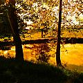 Golden Pond 3 by Nick Kirby