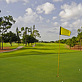 Golf Course by M Cohen
