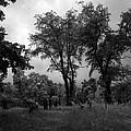 Graveyard 1 by Joyce  Wasser