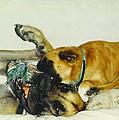 Great Dane And Australian Sheperd by Robert Floyd