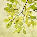 Green Foliage Series by Priska Wettstein