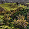 Green Valley  by Isaac Silman