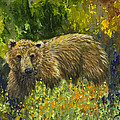Grizzly Study 2 by Dee Carpenter