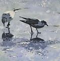 2 Gulls On Ice