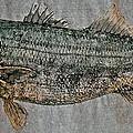 Gyotaku - Striped Bass - Rock Fish - Striper by Jeffrey Canha