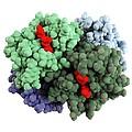 Haemoglobin Molecule by Science Photo Library