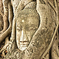 Head Of Buddha Ayutthaya Thailand by Colin and Linda McKie