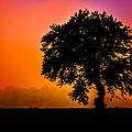 Heart Set Silhouette by Brian Stevens