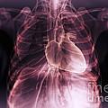 Heart Within The Chest by Science Picture Co