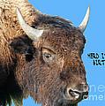 Herd Its Your Birthday by Lizi Beard-Ward