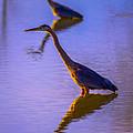 Heron Hues by Brian Stevens