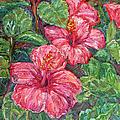 Hibiscus by Kendall Kessler