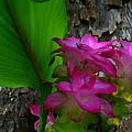Hidden Lilly by Debra Forand
