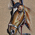 Horse Face - Drawing  by Daliana Pacuraru
