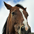 Horse by John Greim