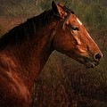 Horse Portrait by Angel Ciesniarska