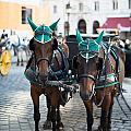 Horses And Carriage In Vienna by Frank Gaertner
