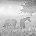 Horses In The Fog by Cheryl Baxter