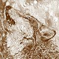 Howling Gray Wolf by J McCombie