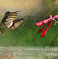 Hummingbird Morning With Verse by Debbie Portwood