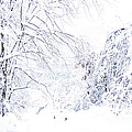 Hurricane Sandy Snow  by Thomas R Fletcher