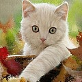 I Love Kittens by Bruce Nutting