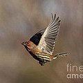 In Flight by Douglas Stucky