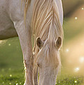In The Land Of  Unicorns by Angel Ciesniarska