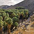 Indian Canyons - California by Yefim Bam