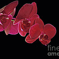 Inspired By Orchids by Inspired Nature Photography Fine Art Photography