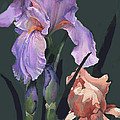 Iris Study by Suzanne Schaefer