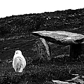 Irish Standing Stones by Patricia Griffin Brett