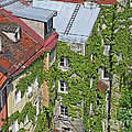 Ivy Courtyard by Ann Horn