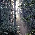 Jedediah Smith Redwoods State Park Redwoods National Park Del No by Jim Corwin