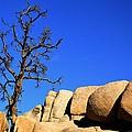 Joshua Tree Rocks by Walt Sterneman