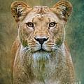 Jungle Cat by Steve McKinzie