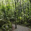 Jungle Trail by Les Cunliffe