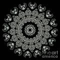 Kaleidoscope Ernst Haeckl Sea Life Series Black And White Set 2 by Amy Cicconi