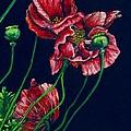 Kara's Poppies by Linda Simon