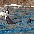 Killer Whale by Richard Jack-James
