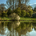 Lake Reflections by Jeremy Hayden