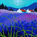 Lavender Field by John  Nolan