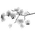 Leaves In Black And White by John Henkel