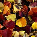 Leaves Of Autumn by Bob Christopher