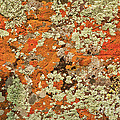 Lichen Abstract by Mae Wertz