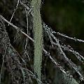 Lichen by Jouko Lehto